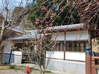 満福寺櫻32.jpg