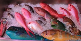 魚32.jpg